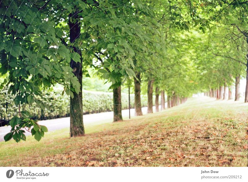 Nature Tree Plant Leaf Calm Far-off places Landscape Grass Lanes & trails Park Arrangement Fresh Bushes Hope Beautiful weather Infinity