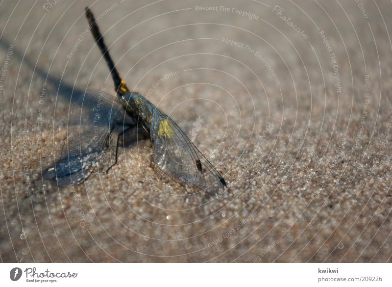 Nature Summer Animal Death Sand Grief Wing Illuminate Exhaustion Compassion Dragonfly Head first Struggle for survival