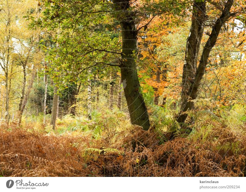 autumn forest Environment Nature Landscape Plant Autumn Tree Leaf Park Forest Brown Yellow Green Background picture colorful fall Lush multi November October