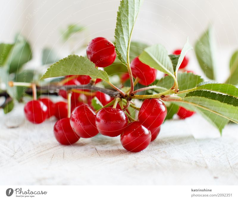 Branch of fresh sour cherries on a wooden table Fruit Vegetarian diet Diet Bowl Summer Table Leaf Dark Fresh Delicious Juicy Sour Wild Brown Green Red Berries