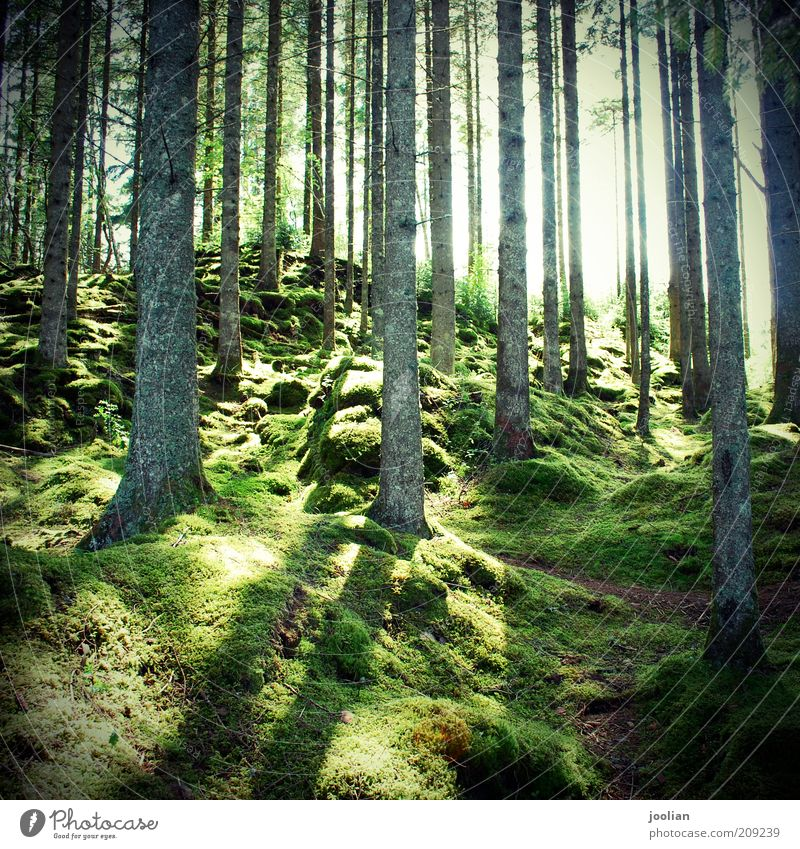 Nature Old Tree Green Plant Summer Calm Forest Dark Autumn Grass Spring Wood Landscape Environment Earth