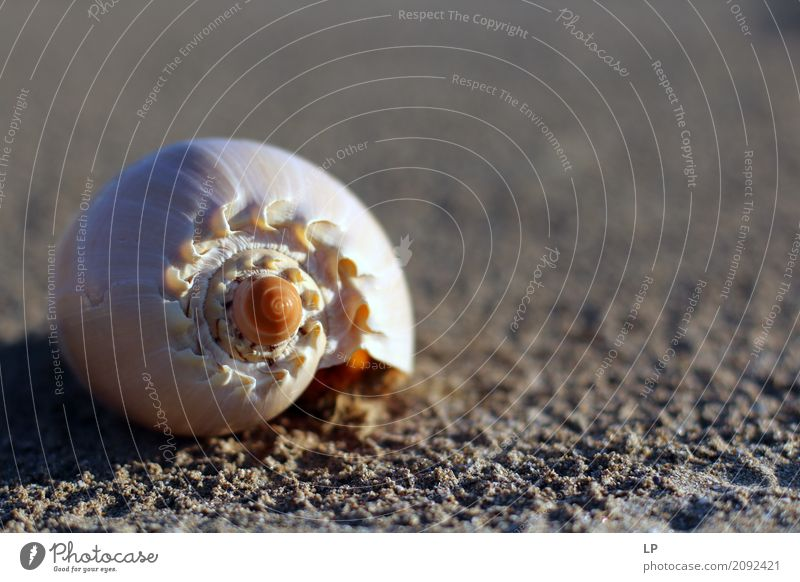 seashell spiral Vacation & Travel Ocean Relaxation Calm Beach Life Lifestyle Emotions Coast Style Sand Design Living or residing Leisure and hobbies Contentment