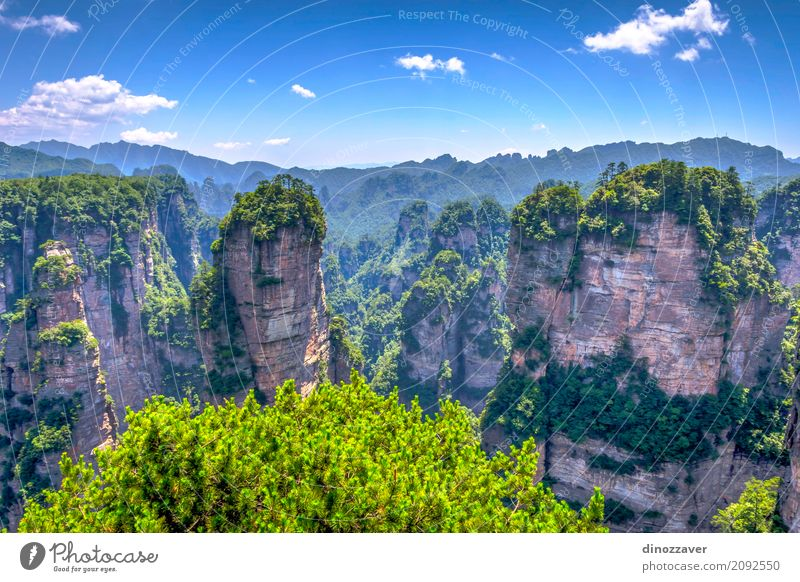 Sandstone columns in Zhangjiajie national park, China Beautiful Vacation & Travel Tourism Sightseeing Mountain Nature Landscape Earth Sky Tree Park Forest Hill