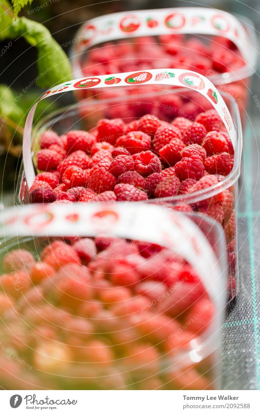 Fresh juicy orgaic raspberies in plastic boxes Fruit Dessert Nutrition Eating Vegetarian diet Diet Summer Table Nature Natural Juicy Red Protection Tradition