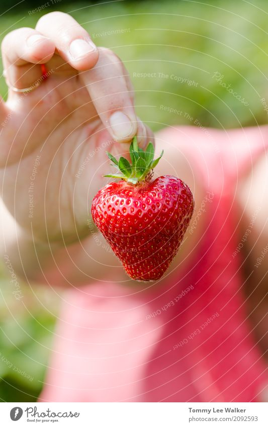 Heart shape strawberry in young adult woman hand Summer Sun Gardening Friendship Youth (Young adults) Exhibition Fresh Bright Juicy Red Pride Strawberry in hand