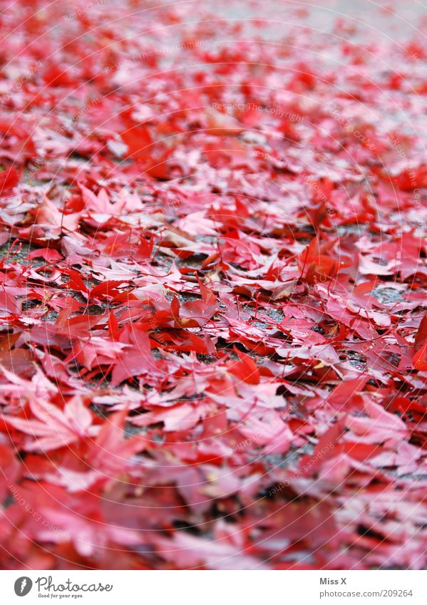 It's coming over. Nature Autumn Leaf Wet Autumn leaves Autumnal Slippery surface Colour photo Multicoloured Exterior shot Deserted Worm's-eye view