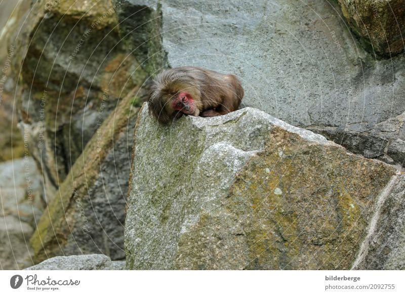 be at rest Vacation & Travel Safari Zoo Rock Monkeys Lie travel Colour photo