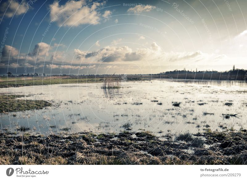 give me Moor Far-off places Environment Nature Landscape Plant Elements Earth Water Sky Clouds Horizon Beautiful weather Meadow Bog Marsh Pond Moor lake