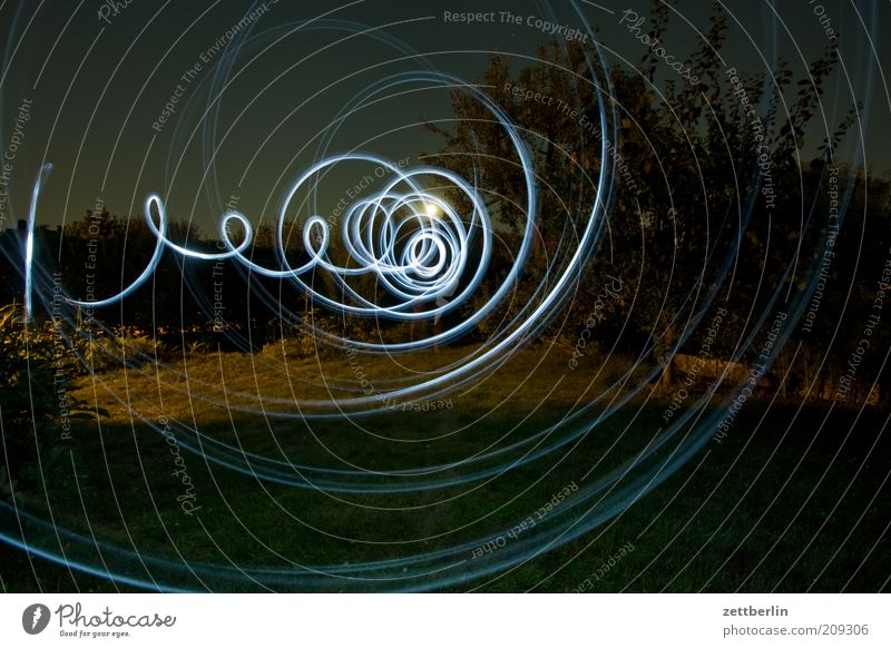 Nature Tree Blue Plant Meadow Garden Circle Growth Lawn Spiral Magic Illumination Circle Swirl Copy Space left Night