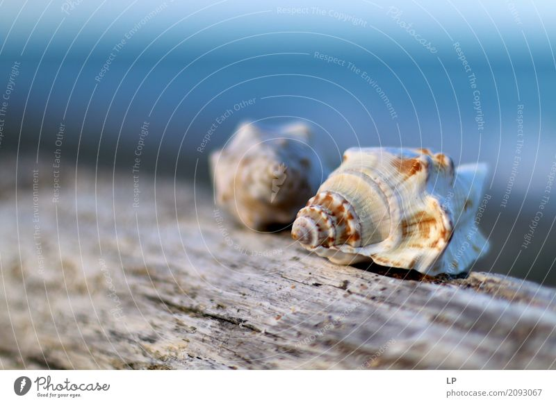 sea shells Sky Nature Vacation & Travel Ocean Relaxation Calm Beach Life Interior design Emotions Freedom Couple Tourism Living or residing Contentment Waves