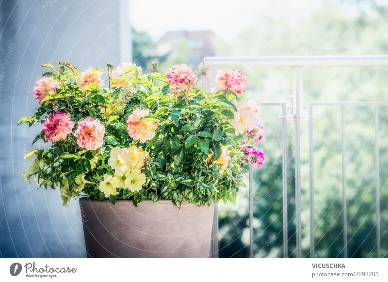 Flowerpot with roses, petunias and verbenas on balcony Lifestyle Style Design Summer Living or residing House (Residential Structure) Garden Decoration Nature