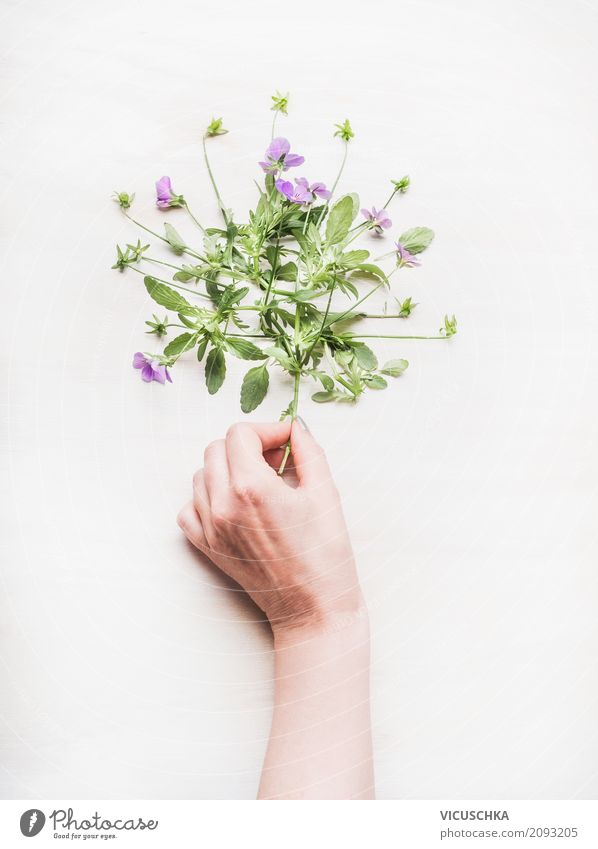 Female hand holds flowers Lifestyle Style Design Leisure and hobbies Garden Feasts & Celebrations Human being Feminine Woman Adults Hand Nature Plant Spring