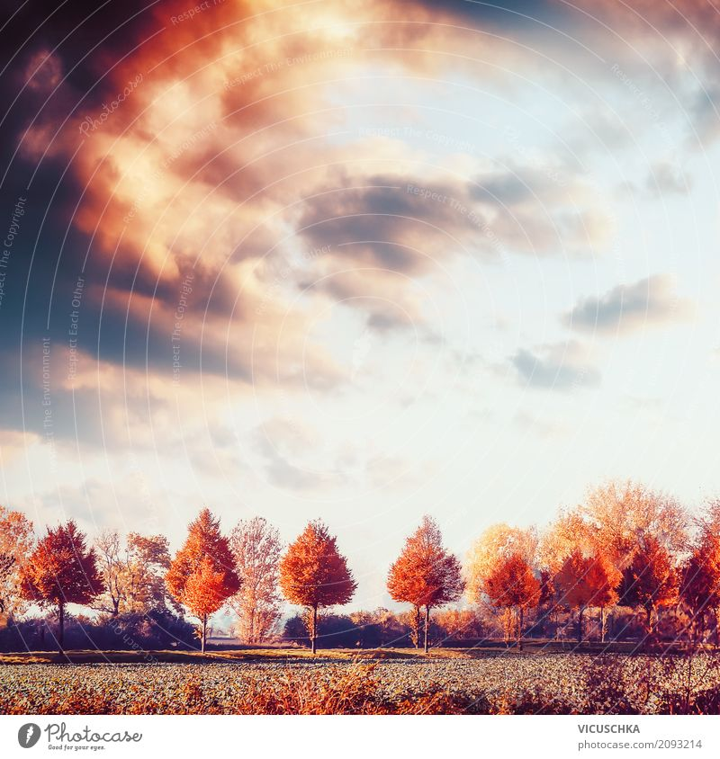 Autumn landscape with trees, field and sky Lifestyle Design Summer Nature Landscape Beautiful weather Tree Meadow Field Yellow Background picture Sky Sunset