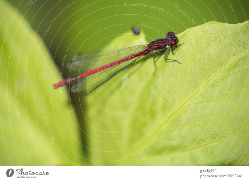 On the edge!!! Environment Nature Spring Summer Plant Leaf Foliage plant Garden Park Pond Lake Animal Wild animal Animal face Wing Dragonfly Dragonfly wings 1