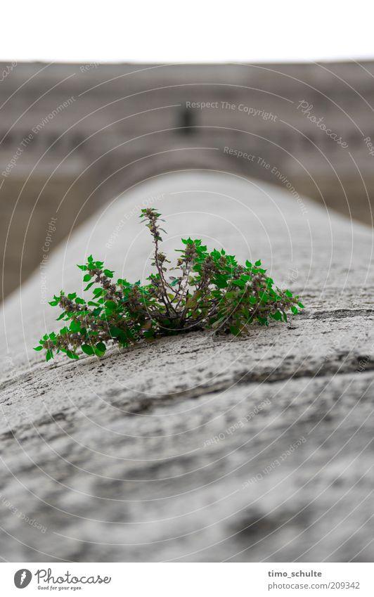 City Green Plant Gray Stone Environment Concrete Growth Bushes Uniqueness Exceptional Foliage plant Concrete wall Stone wall