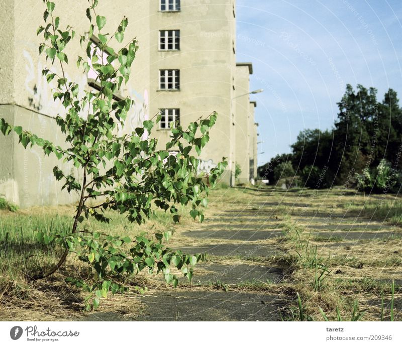 Nature finds it's way Plant Time Prora KdF building Prefab construction Transience Town Sprout Future Growth Vigor Decline Tree Far-off places Large Housefront