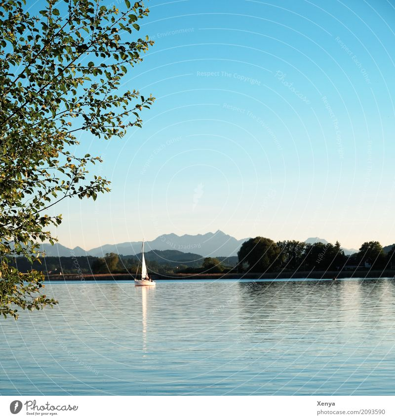 Chiemsee Sailing Summer Nature Beautiful weather Lake Blue Leisure and hobbies Vacation & Travel Sailboat Lake Chiemsee Exterior shot Deserted Copy Space top