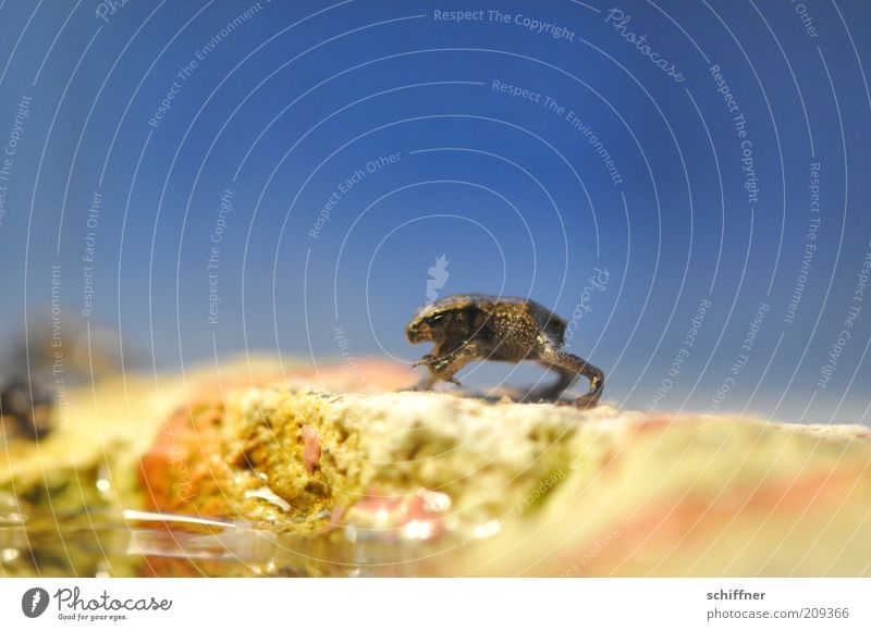 Beautiful Animal Funny Small Stand Frog Wave Offspring Spotted Diminutive Baby animal