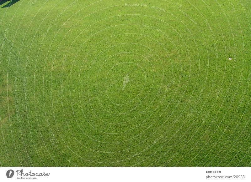 Green Meadow Grass Lawn Level England Great Britain Richmond
