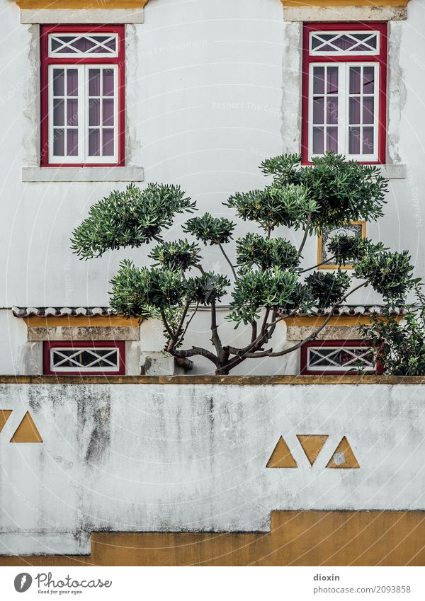 Secret Garden Plant Tree Lisbon Portugal Capital city Port City Deserted House (Residential Structure) Building Wall (barrier) Wall (building) Facade Window