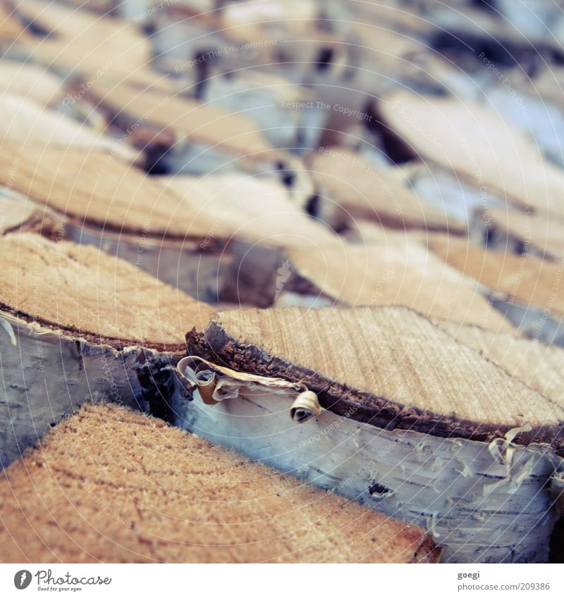 Tree Wood Tree trunk Stack Tree bark Forestry Birch tree Firewood Fuel Combustible Funeral pyre Renewable raw materials Birch bark