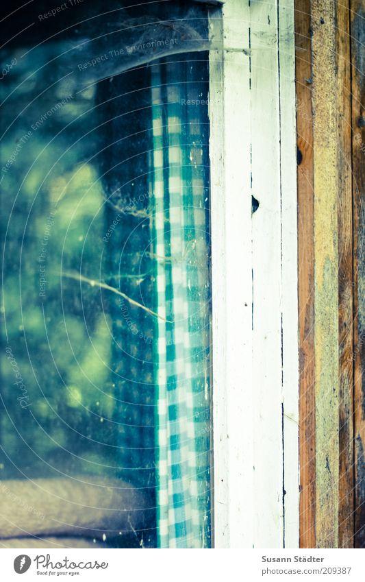 Window Wood Glass Drape Window pane Checkered Spider's web Pane Net Gardenhouse Window frame Cobwebby Unkempt