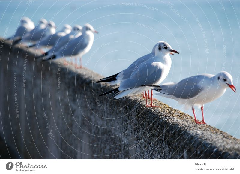 Ocean Animal Bird Coast Wait Sit Vantage point Observe Wild animal Row Seagull Flock Structures and shapes Flock of birds Beaded