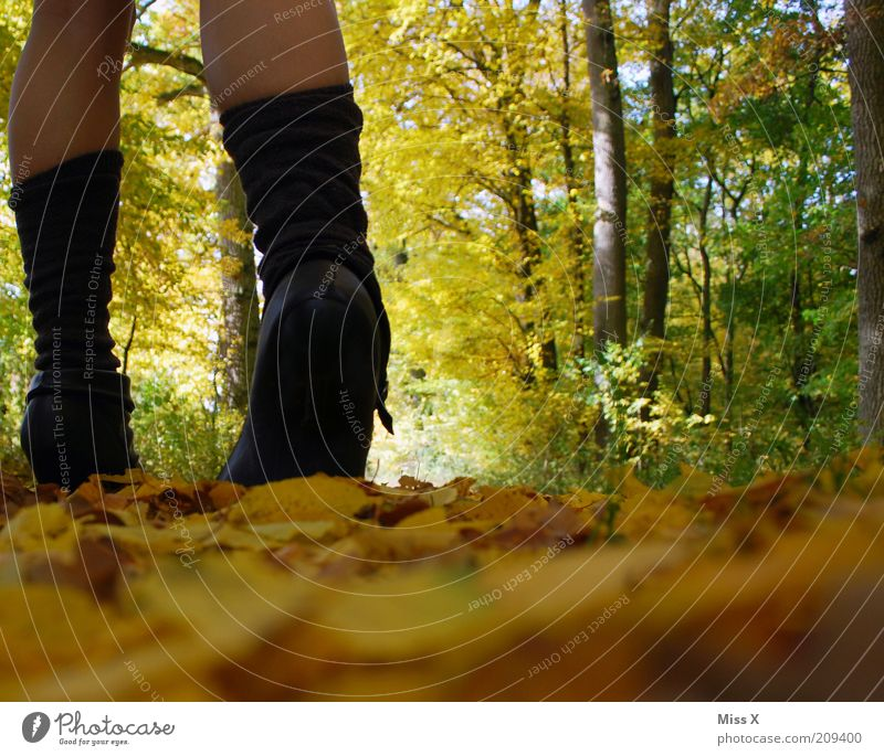 Hellooo autumn ! Vacation & Travel Trip Hiking Human being Young woman Youth (Young adults) Legs 1 Nature Autumn Climate Beautiful weather Tree Leaf Park Forest
