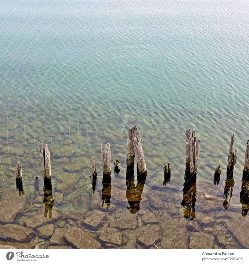 Lake Constance Environment Nature Water Lakeside Stone Pole Wood Structures and shapes Colour photo Copy Space top Break water Decline Derelict Ravages of time