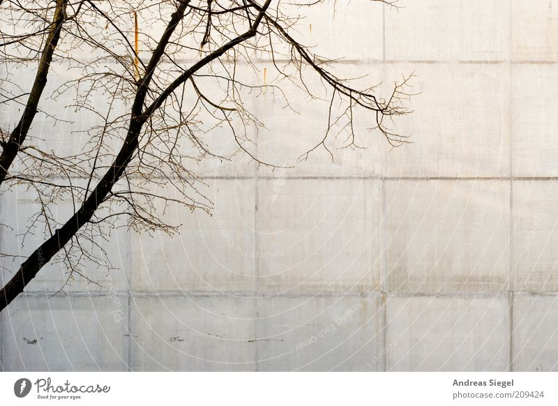 Nature Tree House (Residential Structure) Wall (building) Gray Wall (barrier) Building Line Environment Concrete Facade Gloomy Branch Dry Twig Converse