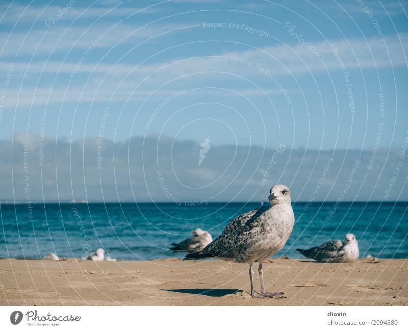 Sky Nature Vacation & Travel Summer Ocean Animal Far-off places Beach Environment Coast Tourism Freedom Bird Waves Island Summer vacation