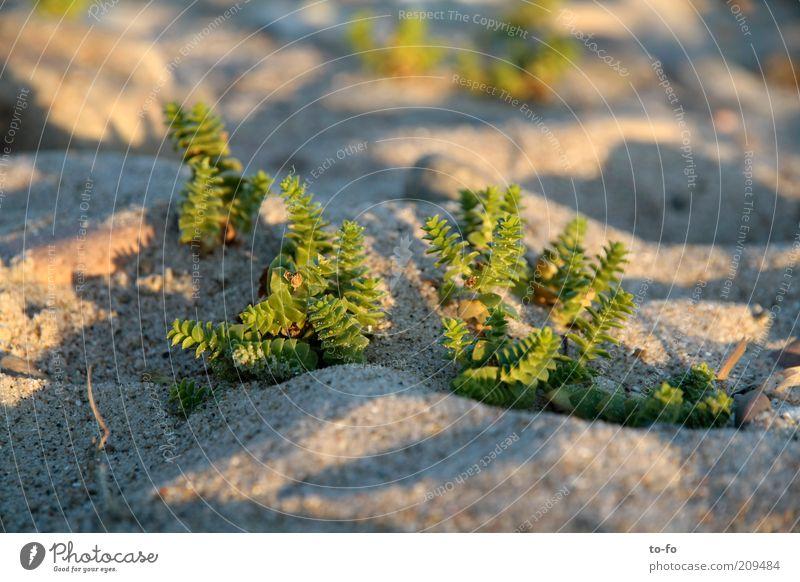 Nature Green Plant Beach Sand Coast Small Sedum