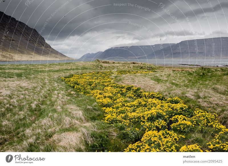 Marsh marigold trail 2 Nature Landscape Plant Air Water Sky Clouds Horizon Spring Bad weather Wind Grass Wild plant Meadow Rock Mountain Coast Bay Fjord Brook