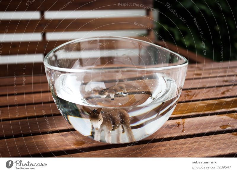 bowl the first Animal Farm animal Animal face Aquarium Donkey 1 2 Threat Bowl Water Refraction Table Bench Glass Drops of water Colour photo Exterior shot