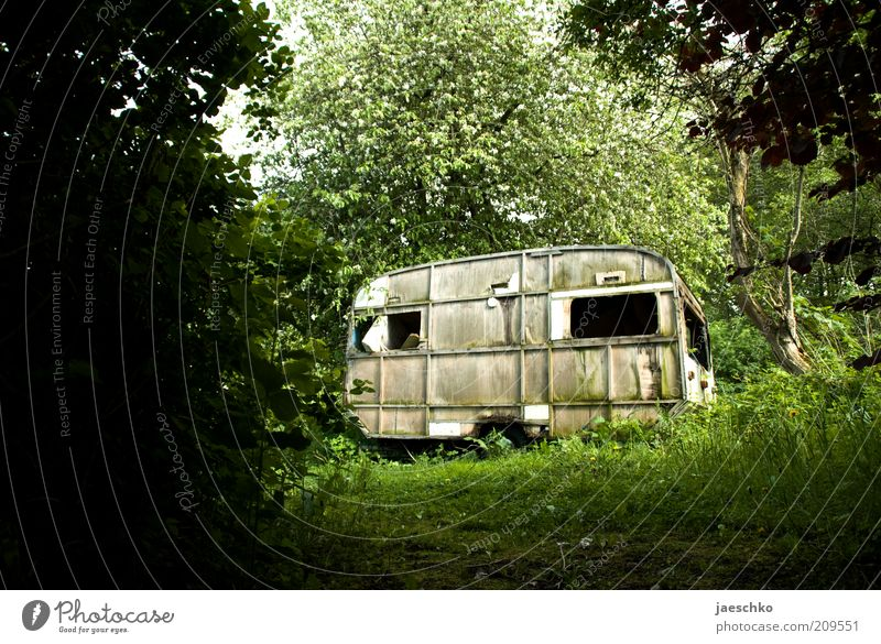 Old Tree Green Vacation & Travel Forest Dark Grass Garden Time Empty Gloomy Bushes Transience Derelict Past Camping
