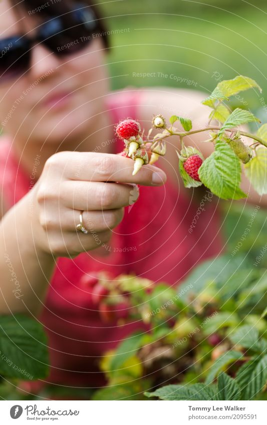 Young adult woman picking raspberries Fruit Lifestyle Joy Happy Beautiful Freedom Summer Garden Work and employment Gardening Woman Adults Youth (Young adults)