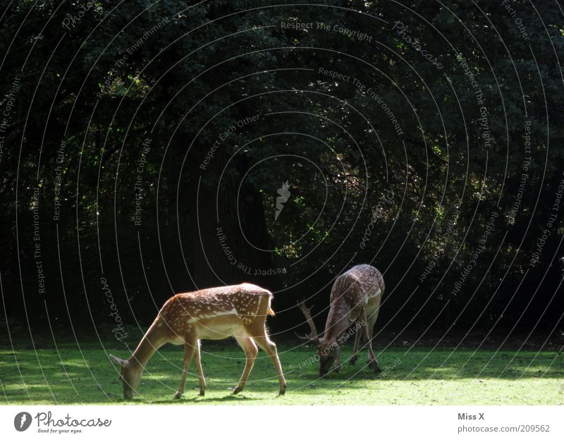 Nature Tree Green Summer Calm Animal Forest Meadow Autumn Grass Park Wild Zoo Wild animal To feed Deer