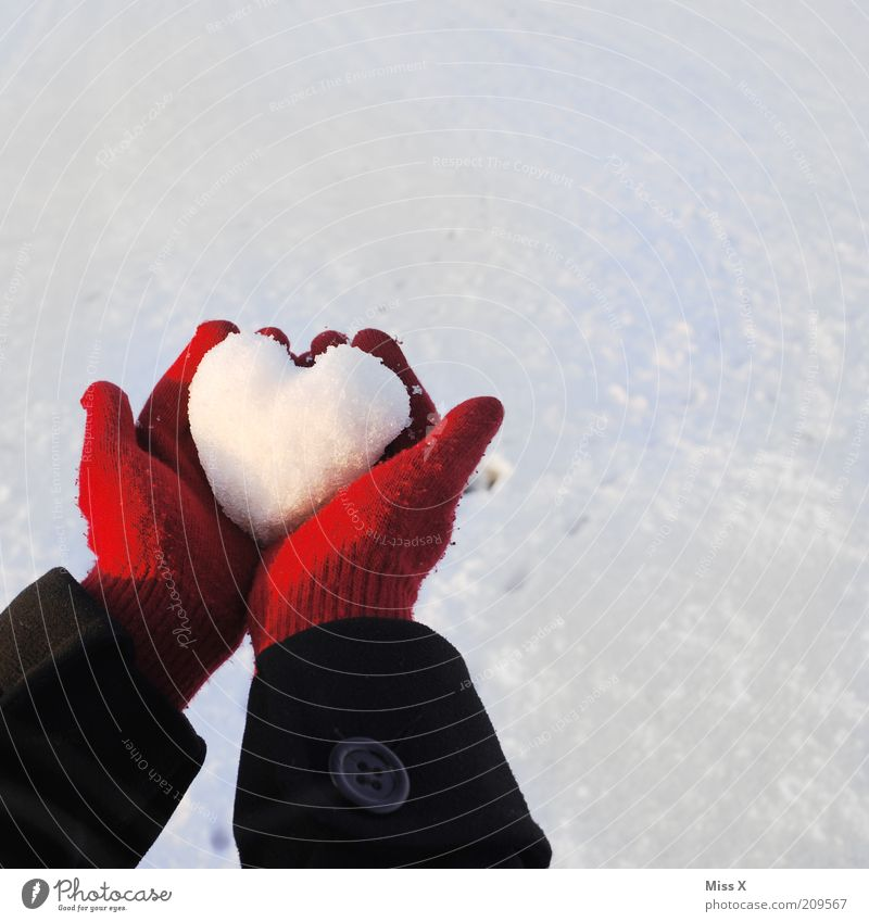 Human being Youth (Young adults) Hand White Red Winter Love Cold Snow Emotions Moody Ice Heart Gift Frost Hope