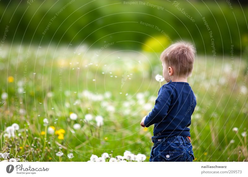 Human being Child Nature White Flower Green Blue Plant Joy Boy (child) Meadow Playing Grass Happy Contentment Moody