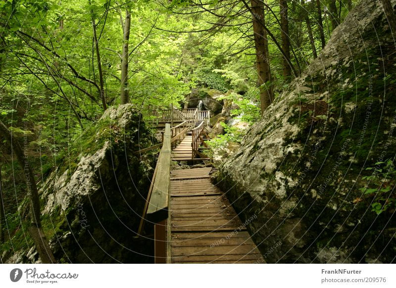 Stairway to Green Hell Leisure and hobbies Vacation & Travel Tourism Trip Summer Summer vacation Mountain Hiking Environment Nature Landscape Plant Elements