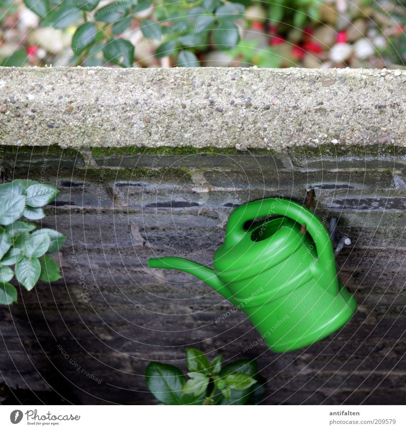 watering can Summer Living or residing Wall (barrier) Wall plant Building stone Nature Plant Bushes Rose Leaf Garden Wall (building) Facade Balcony Terrace