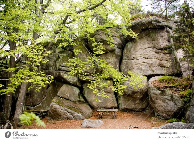 Nature Tree Summer Vacation & Travel Far-off places Forest Freedom Mountain Landscape Environment Stone Trip Hiking Rock Tourism Bushes