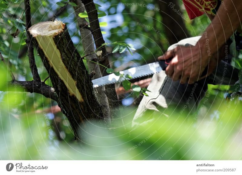 male labour Profession Gardening Horticulture Forestry Craft (trade) Man Adults Arm Hand Fingers 1 Human being Nature Sky Summer Tree Saw Metal To hold on Brown