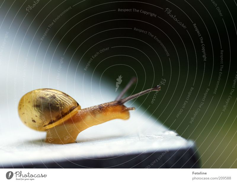 Nature Animal Yellow Bright Environment Natural Wild animal Transparent Snail Feeler Crawl Slimy Action Snail shell
