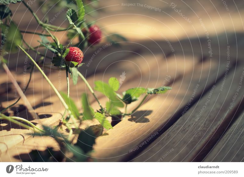 Green Plant Red Leaf Wood Fruit Growth Mature Wooden board Berries Strawberry Graceful Tendril Furniture Wooden table Table decoration