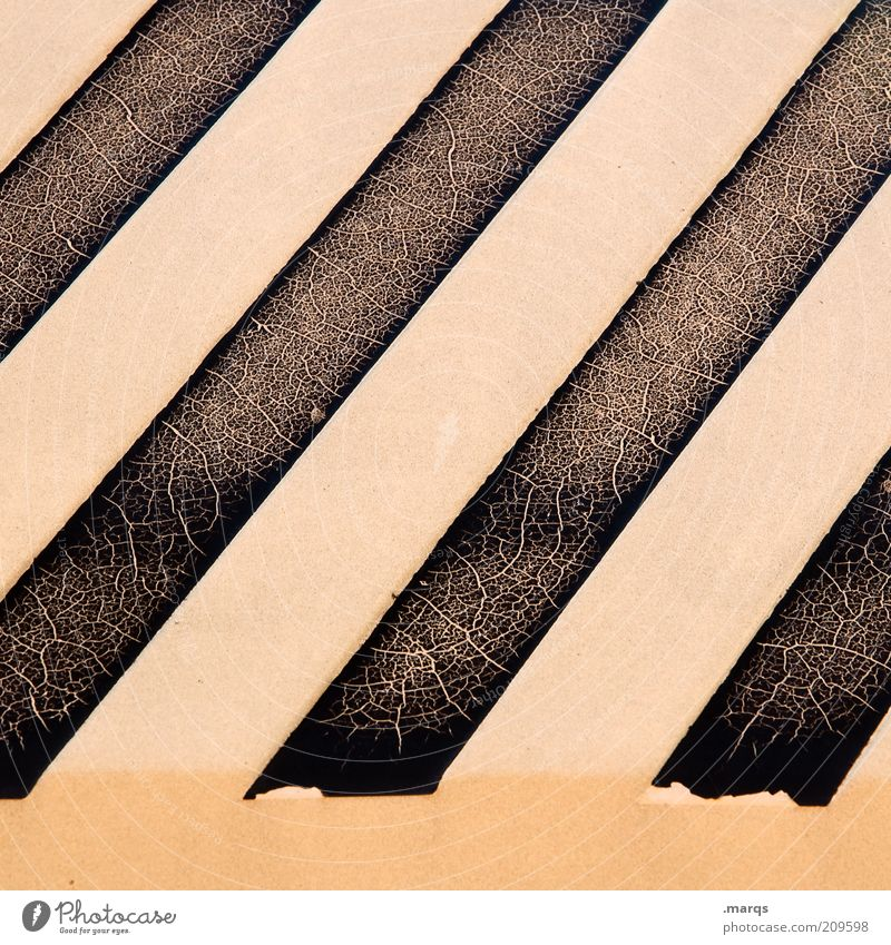zebra Style Design Line Stripe Exceptional Simple Uniqueness Broken Decline Flake off Subdued colour Detail Abstract Structures and shapes Striped