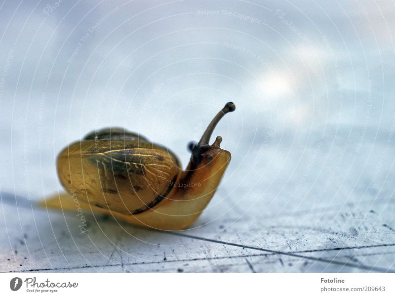 But now quickly to Sesame Street Environment Nature Animal Wild animal Snail 1 Natural Slimy Smoothness Crawl Colour photo Multicoloured Exterior shot