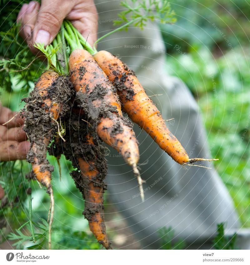 Nature Hand Plant Garden Dirty Food Environment Fingers Earth Fresh Authentic Simple Leisure and hobbies Joie de vivre (Vitality) Vegetable Mature