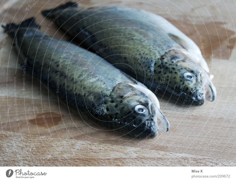 Today it's cold Food Fish Nutrition Dinner Organic produce Animal 2 Fresh Delicious Trout Colour photo Subdued colour Interior shot Close-up Deserted