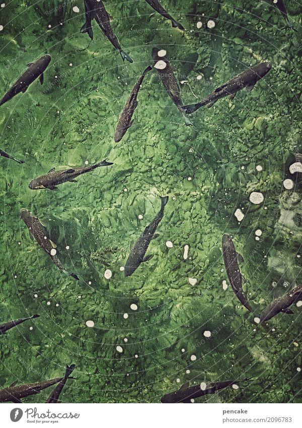 Elixir of life fresh fish. Elements Water Animal Wild animal Fish Flock Life Joie de vivre (Vitality) Shoal of fish Alert Fresh Green Vitally important